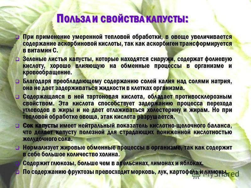 Капустный лист. кладовая здоровья