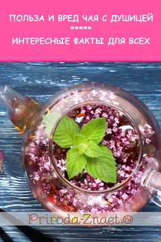 Чай с душицей: его свойства, польза и вред для здоровья