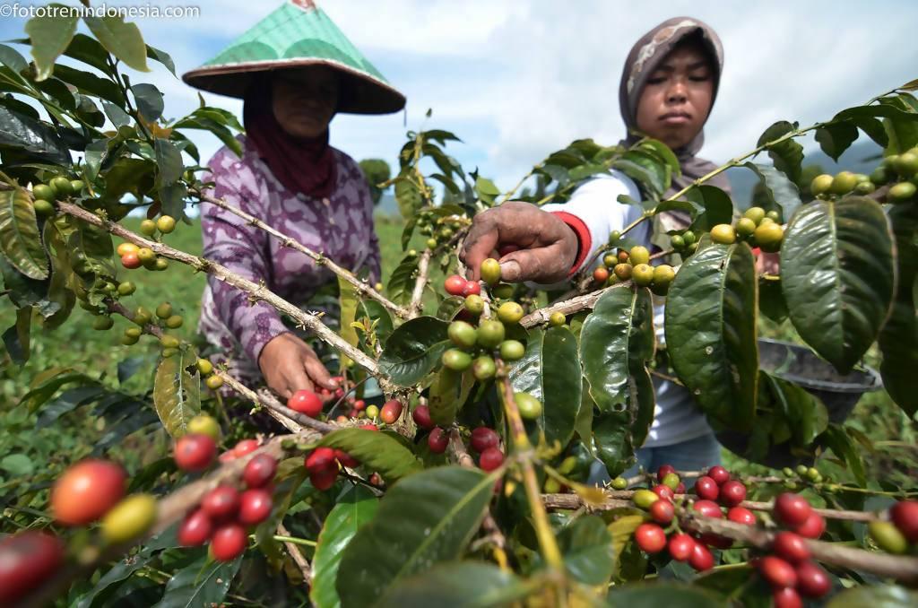 Высший свет: 5 самых дорогих сортов кофе в мире
