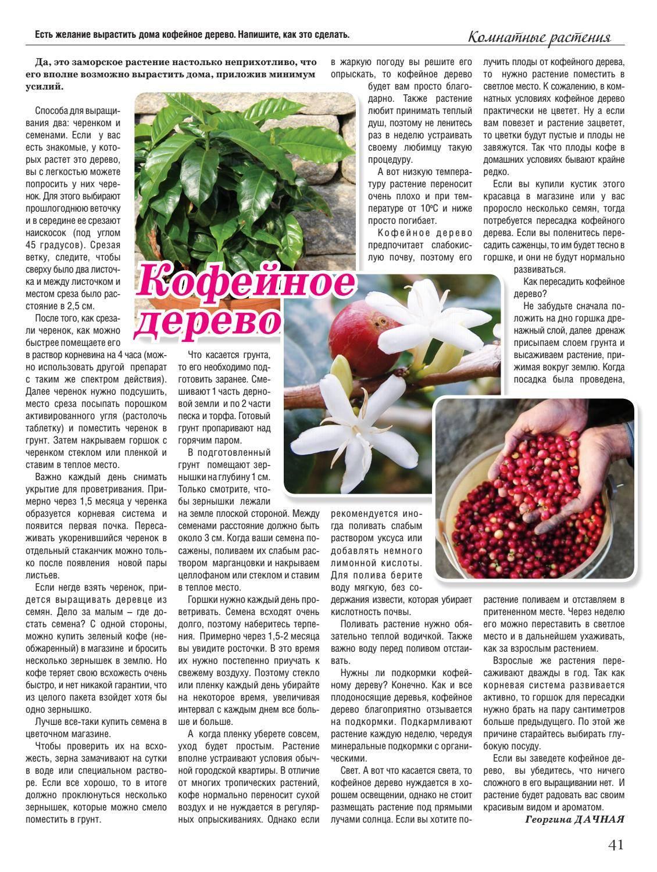 Кофейное дерево - как ухаживать за экзотическим растением?