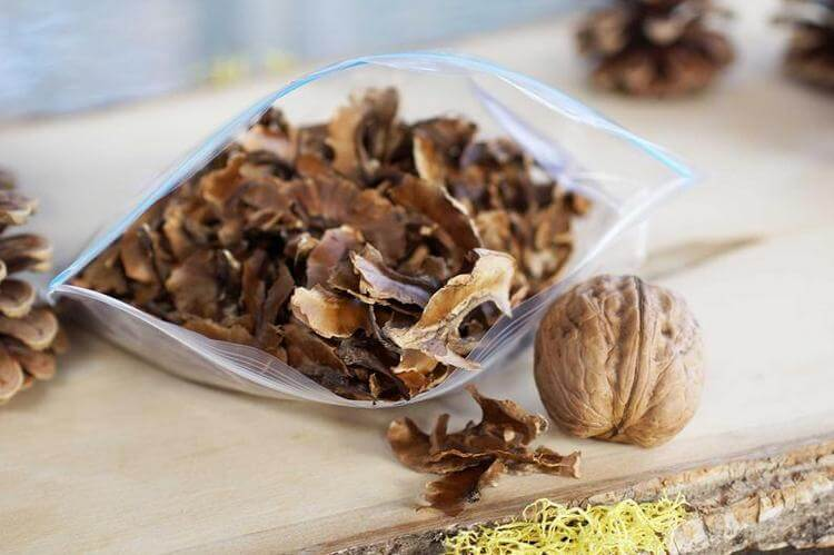 Грецкий орех: полезные свойства и противопоказания, лечебные рецепты применения в народной медицине, использование масла