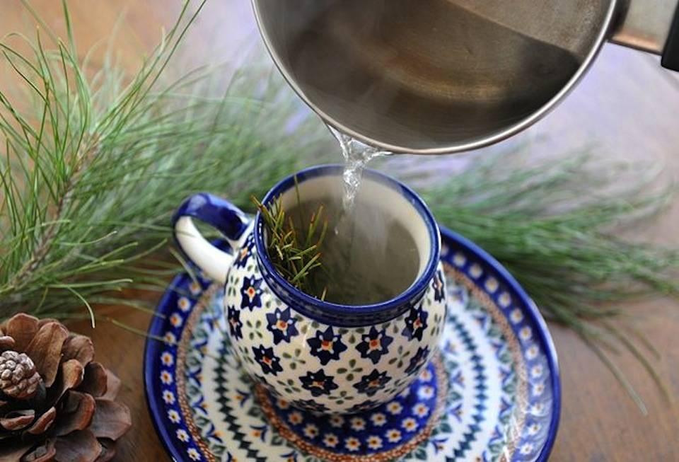 Чай из ели противопоказания