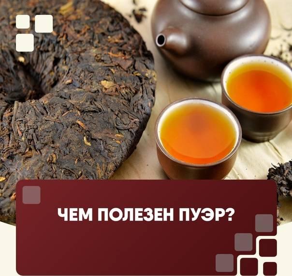 Противопоказания и полезные свойства чая пуэр