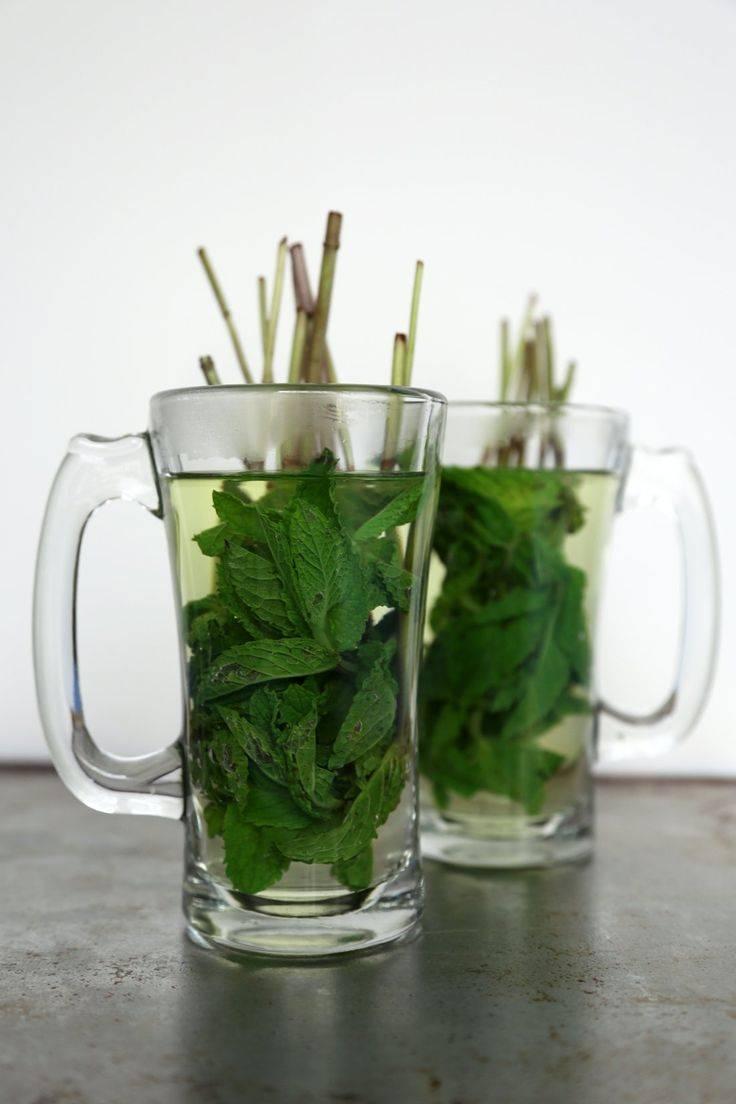 Как заваривать мяту, новый вкус мятного напитка