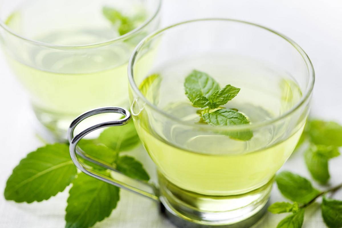 Мята перечная - польза и вред для мужчин, женщин, чай с мятой