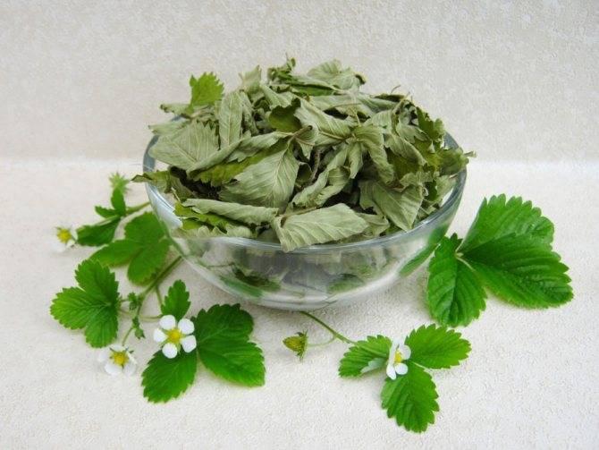 Как сушить землянику: секреты и правила длительного хранения. как сушить землянику для чая: польза ягод и листов - секреты садоводов