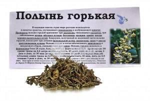 Полынь горькая: лечебные свойства травы и противопоказания