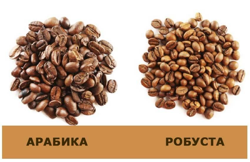 Робуста - что это за сорт кофе, отличие от арабики, особенности вкуса и аромата