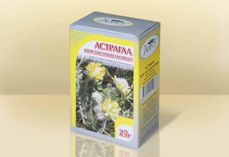 Астрагал шерстистоцветковый: лечебные свойства и противопоказания, применение в народной медицине