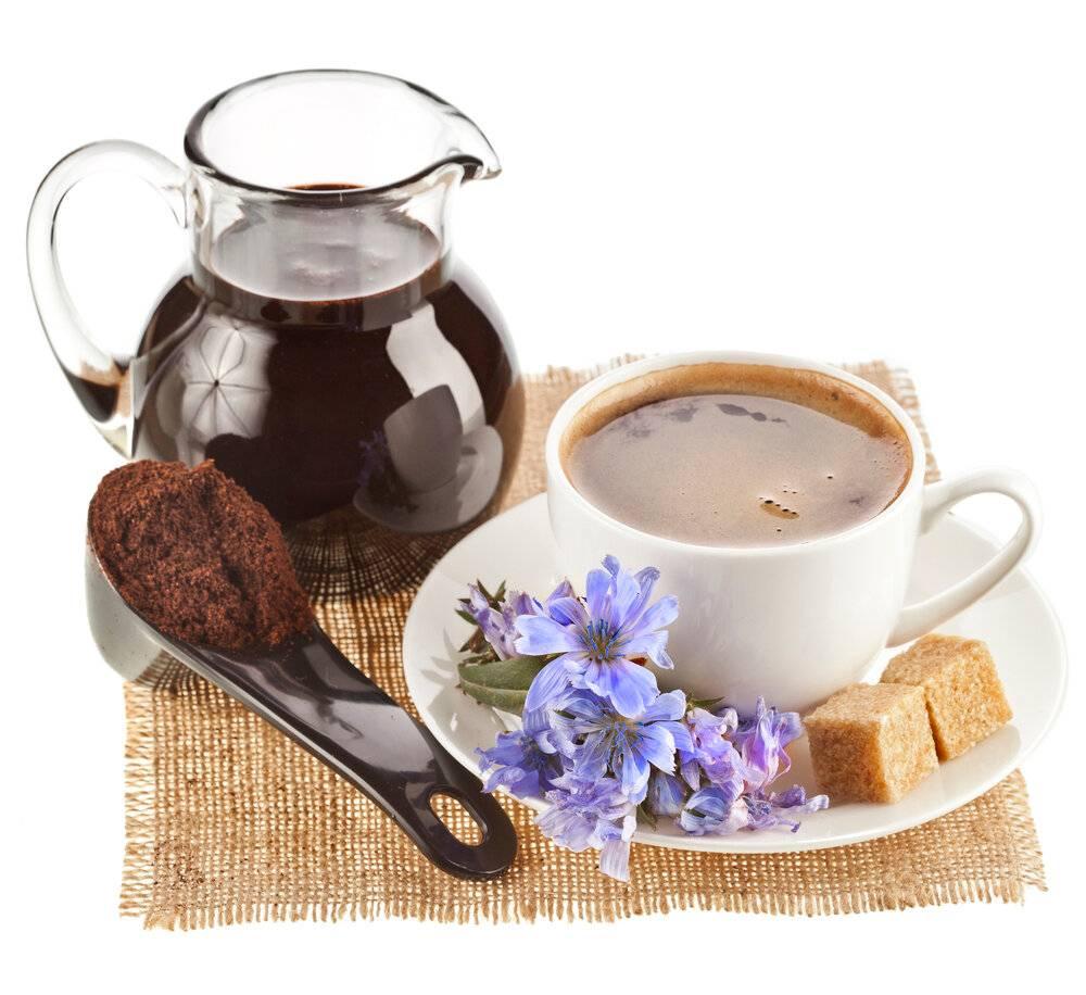 Цикорий вместо кофе. польза и вред. личный опыт