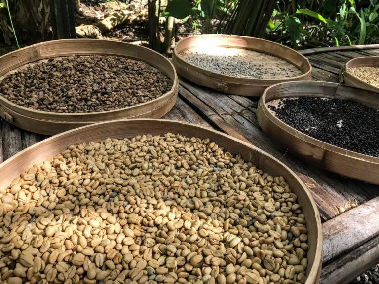 Kopi luwak (копи лювак) – кофе из экскрементов