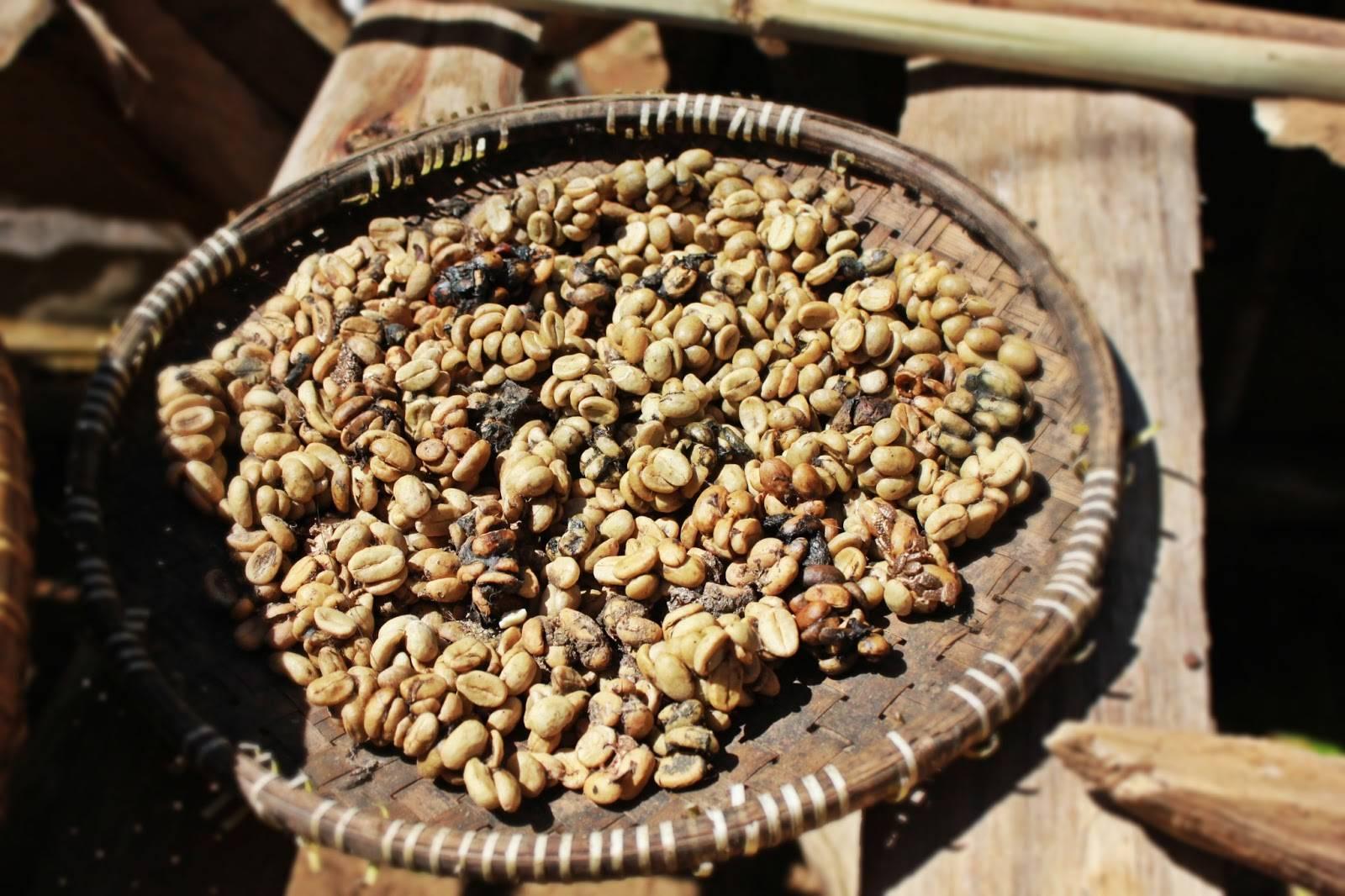 Кофе копи-лювак: цена, сорта, вкус