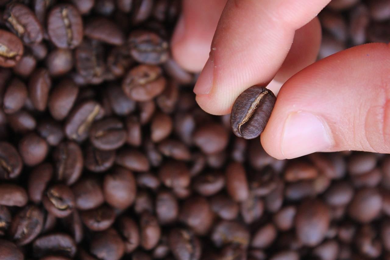 Можно ли есть кофейные зерна? польза и вред
