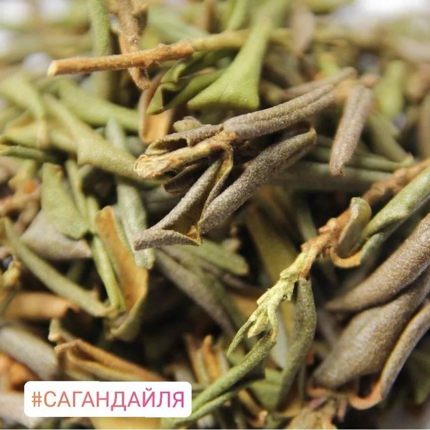 Чай саган-дайля: энергетик, продлевающий жизнь