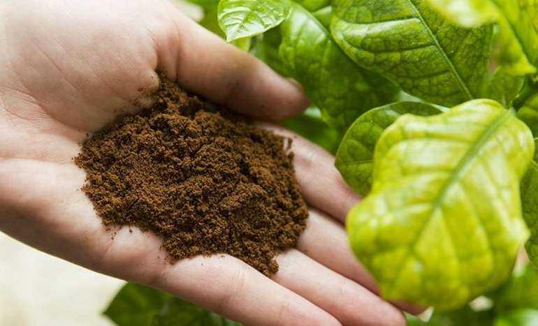 Как использовать чайную заварку в качестве удобрения