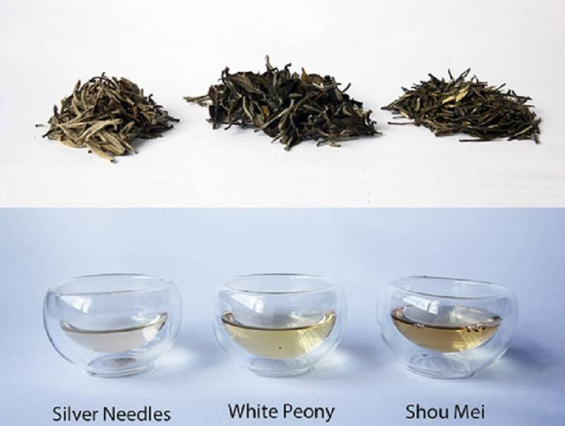 Польза белого чая: почему он считается элитным и стоит дорого