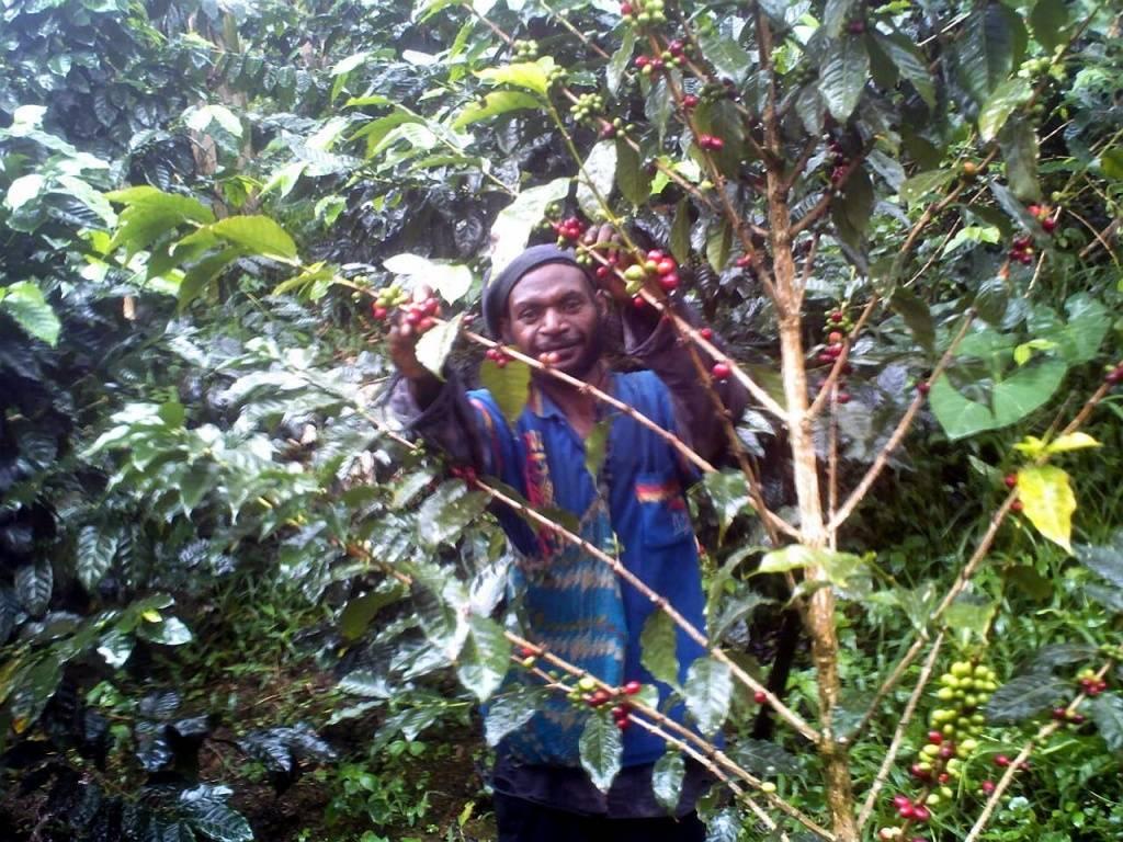 Элитный зерновой кофе царское подворье, папуа новая гвинея sigri aa 500 гр