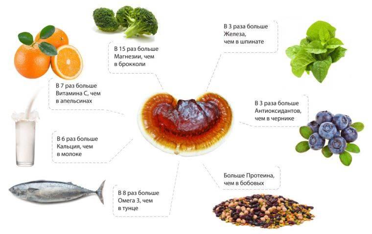 Гриб рейши - полезные свойства и противопоказания