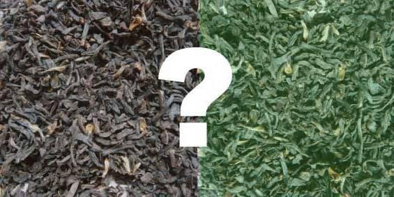 Чем отличается черный чай от зеленого?