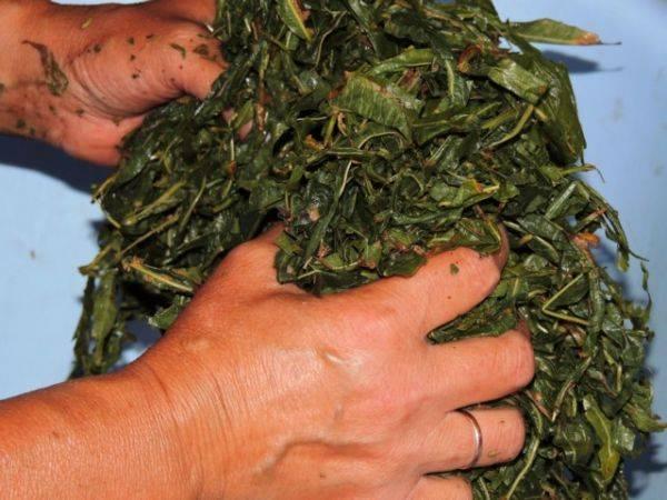 Как хранить иван чай после сушки, советы и рекомендации