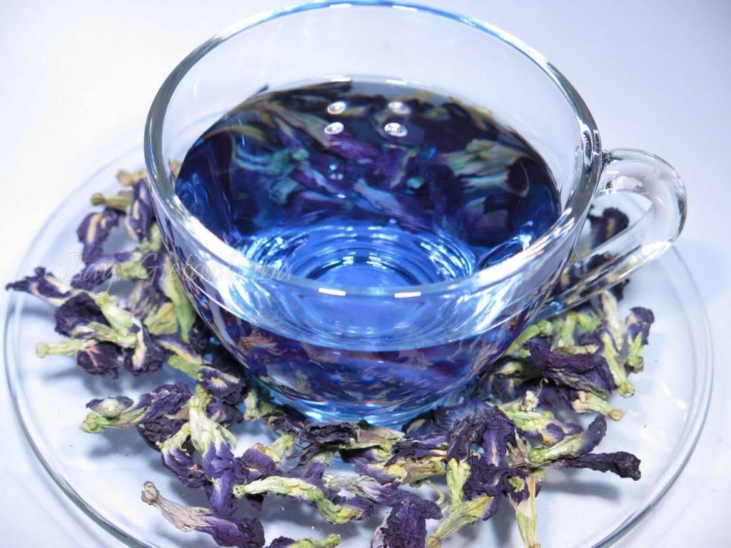 Синий чай из тайланда: полезные свойства и отзывы о нём, как принимать внутрь и наружно, мнение врачей, противопоказания и нюансы применения