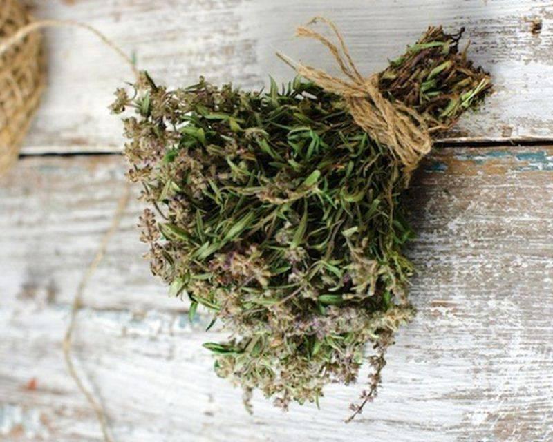 Как сушить мяту: варианты сушки в домашних условиях, требования к подготовке травы и способы хранения