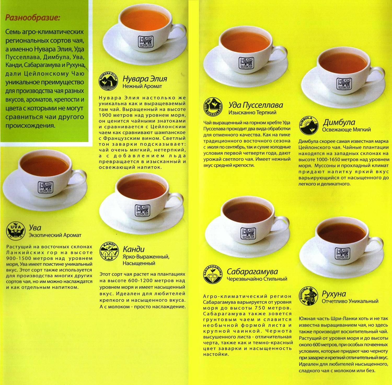Чайная азбука, или как выбрать качественный чай | просто есть