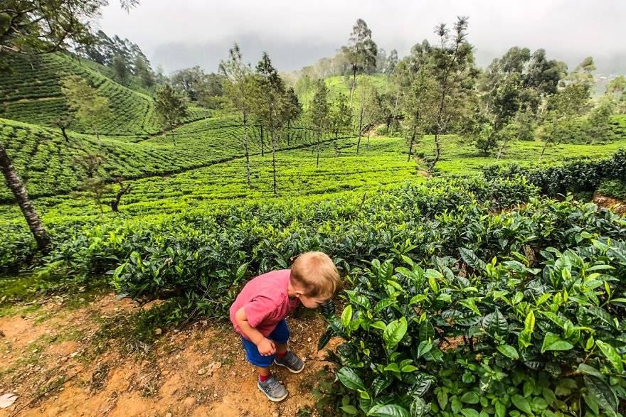 Капитан очевидность о возрасте чая и цене на чай - teaterra   teaterra