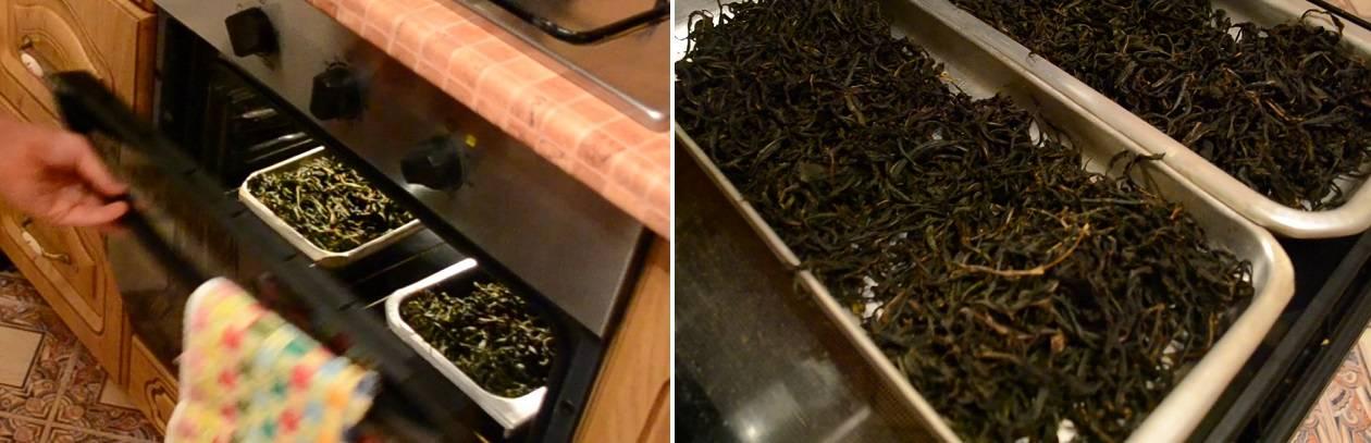 Как правильно ферментировать иван-чай в домашних условиях через мясорубку, в банке, видео