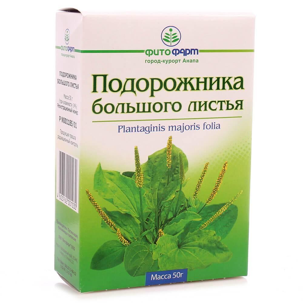Трава подорожник: лечебные свойства и применение в домашних условиях