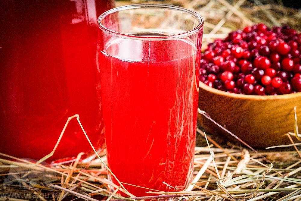 Брусничный чай, морс: польза, вред, рецепты приготовления