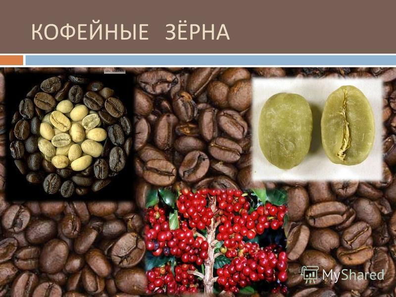 Где находится родина кофейного дерева европа африка азия южная америка