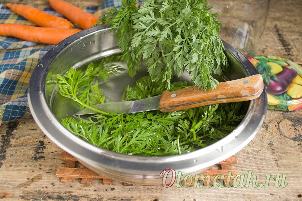 Ботва моркови: стоит ли выбрасывать такой полезный продукт?