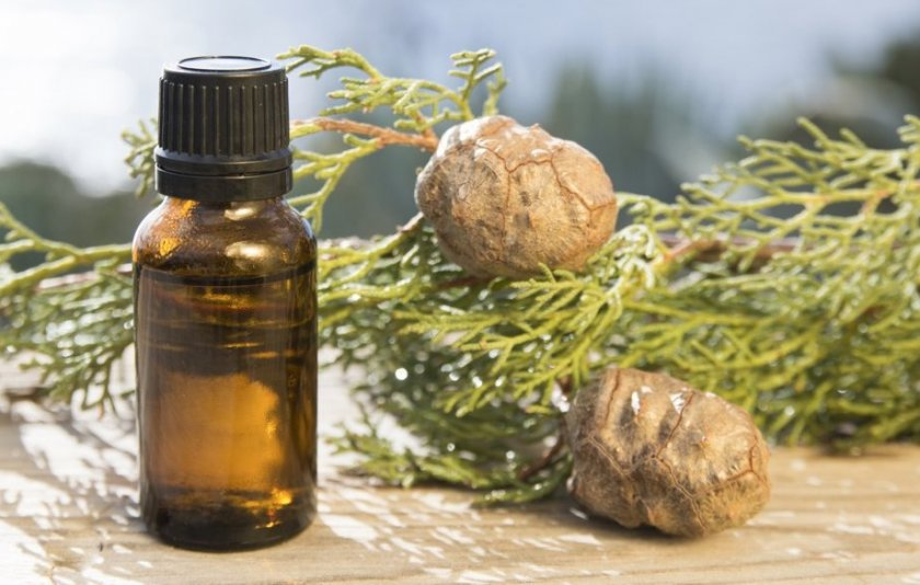 Масло туи лечебные свойства и противопоказания