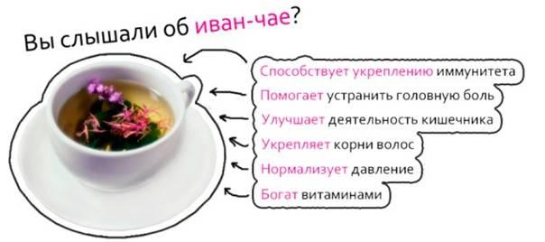 Иван-чай: лечебные свойства и советы экспертов