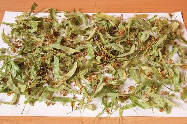 Заготовка мелиссы на зиму для чая
