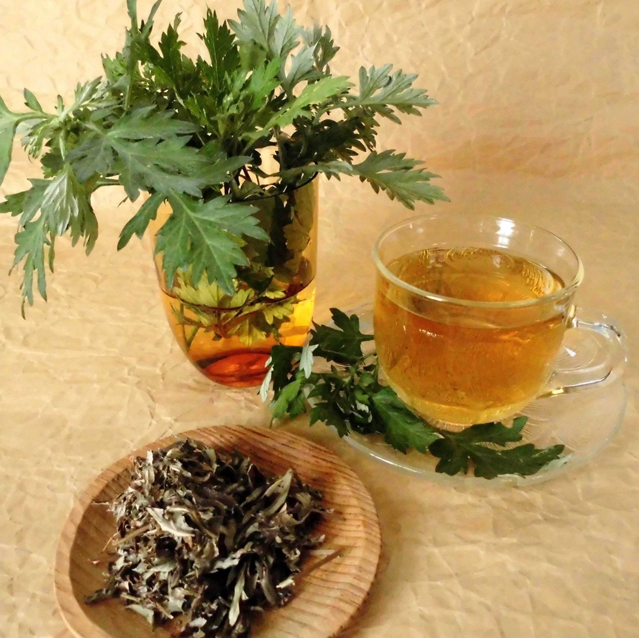 Полынь горькая: лечебные свойства и противопоказания, особенности народных рецептов | здорова и красива