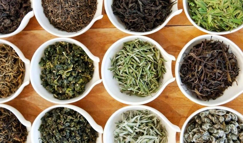 Критерии выбора зеленого чая