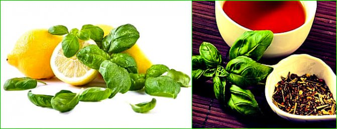 Чай с базиликом — рецепты приготовления целебного напитка