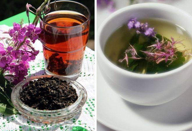 Как заваривать иван-чай: самые простые и популярные способы