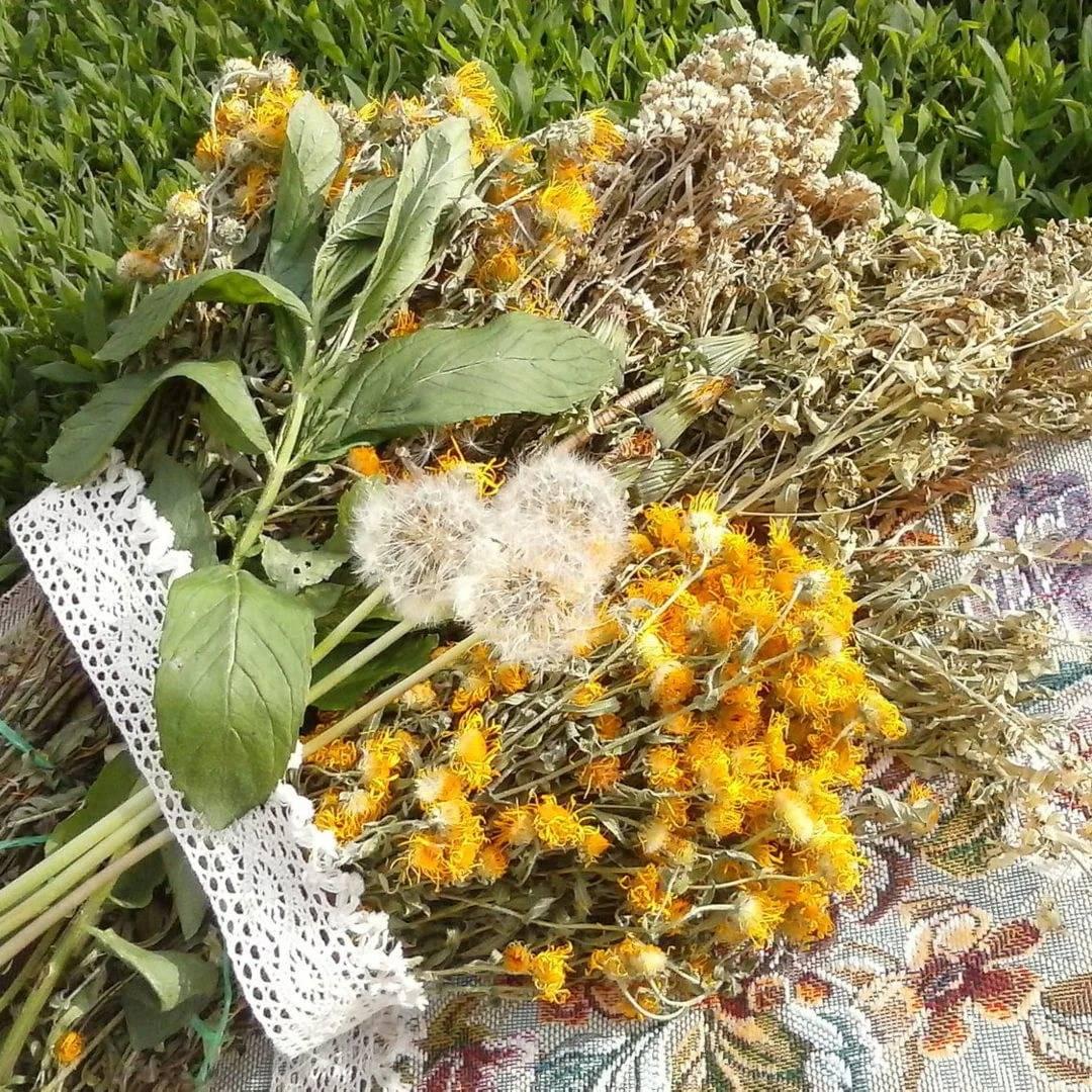Чабрец — когда собирать и как сушить: в чем хранить сушеные травы и как их приготовить, для чего нужен тимьян   domovoda.club
