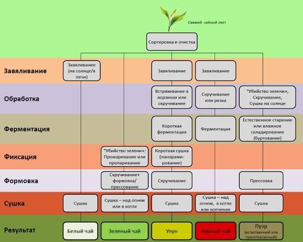 Какой иван чай полезней ферментированный или неферментированный