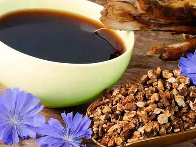 Цикорий: польза и вред для здоровья