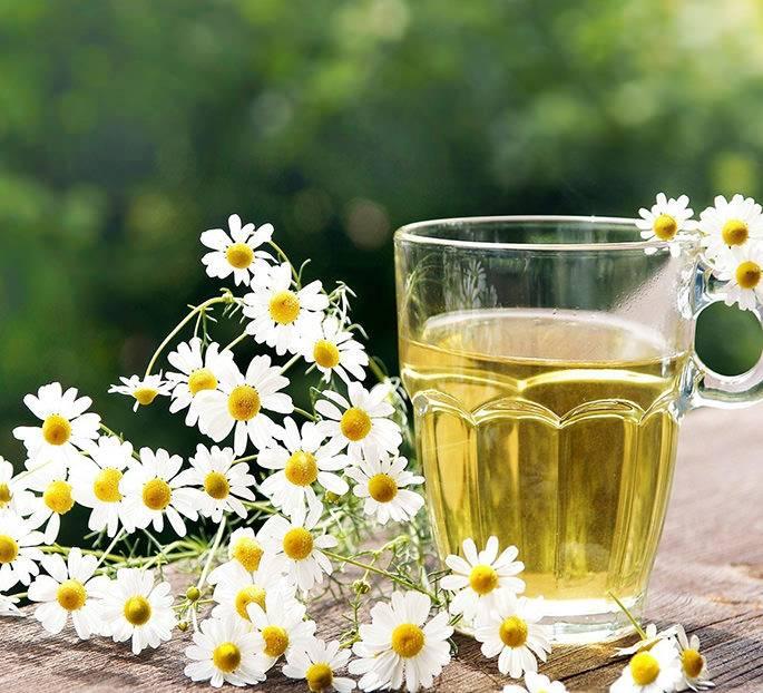 Чай из ромашки. полезные свойства и противопоказания