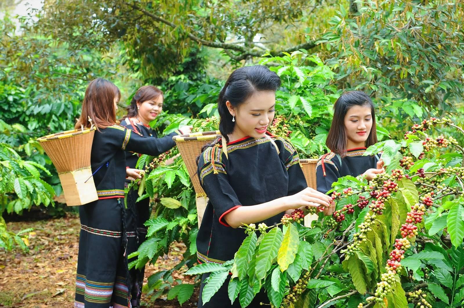 Кофе из вьетнама лювак: стоимость во вьетнаме