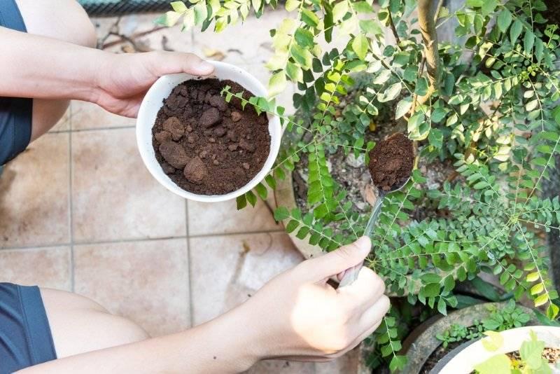 Кофейная гуща и жмых как удобрение для огорода: полезные свойства и применение