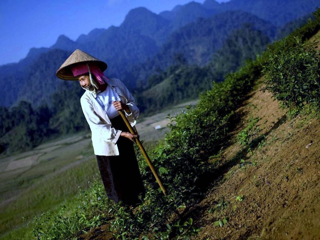 Кофе во вьетнаме: какой и где покупать   блог о приключениях ксюши и славы наймушиных