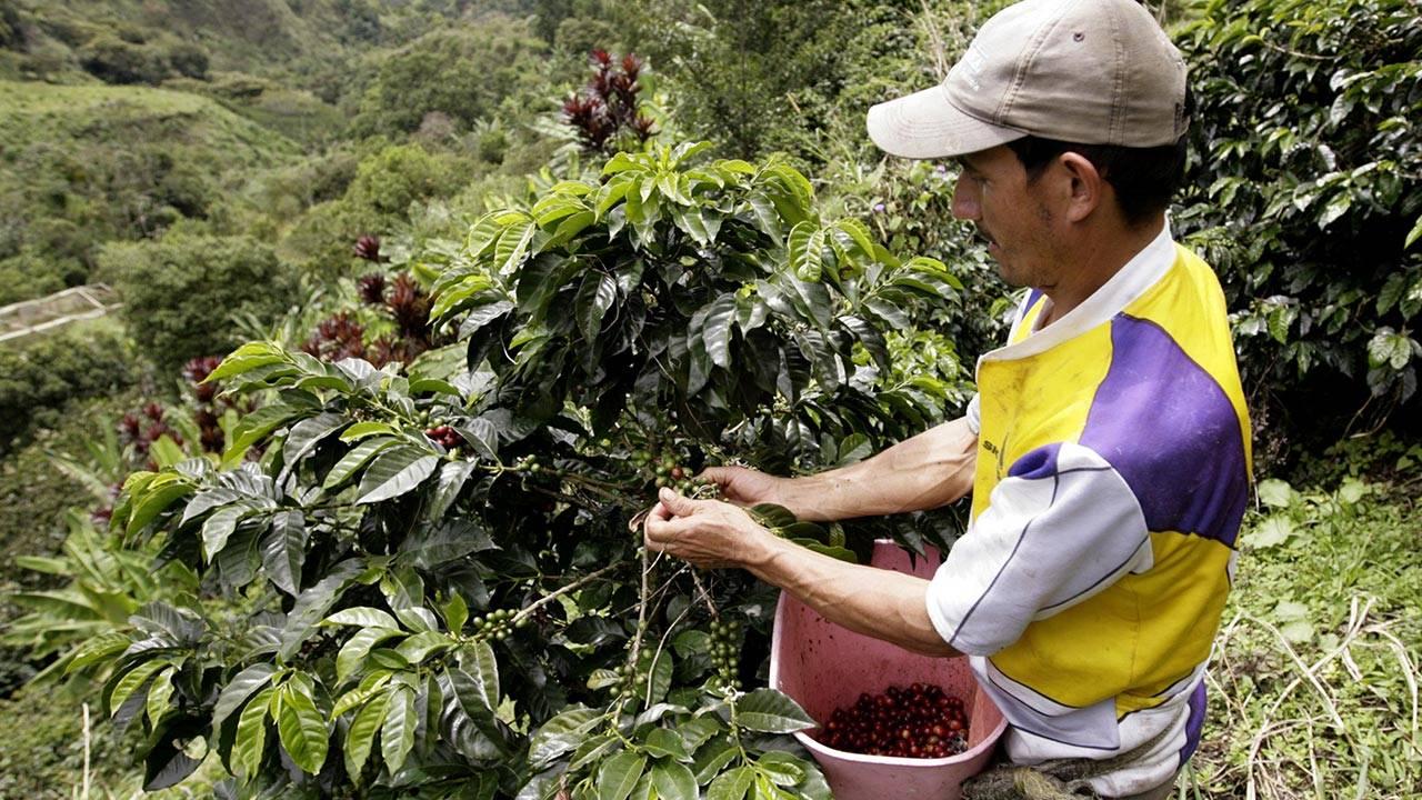 Экспорт, импорт, производство и потребление кофе в мире, лидеры