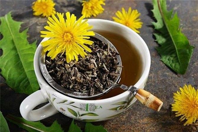 Чай из одуванчиков: чем он помогает и какие свойства имеет. применение чая из одуванчиков, польза и вред травяного напитка | женский интернет-дайджест добронега.ру