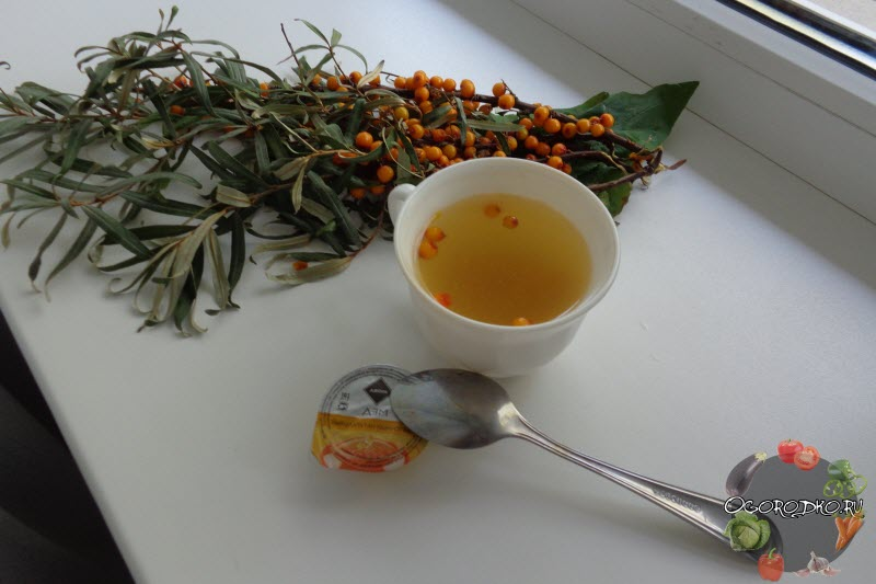 Облепиховый чай: польза для души и тела + лучшие рецепты